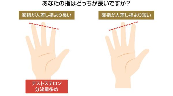 指の長さでわかるテストステロンの分泌量