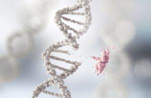 科学的には証明されていない「遺伝」