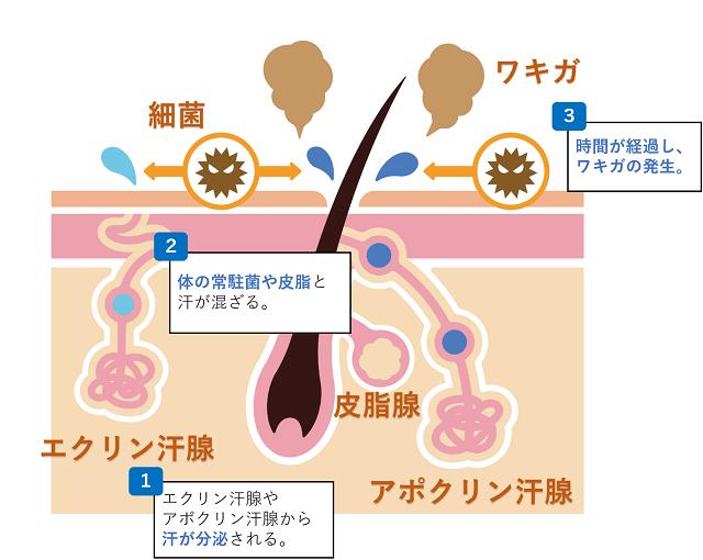 wakiga_mechanism