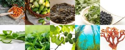 日本古来の厳選10種の植物エキス