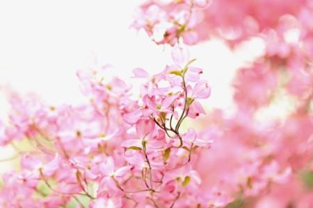 春・秋は対応調節しやすいもの