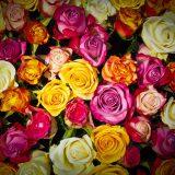 バレンタイン・ホワイトデーに渡す薔薇に意味・おすすめの渡し方