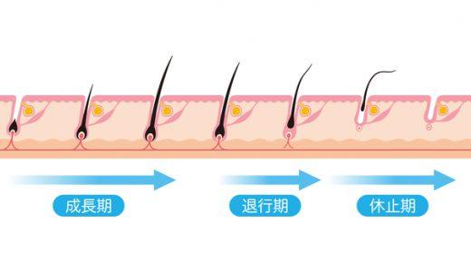 メンズ脱毛のペースは毛周期で決まる!【脱毛方法別のペースを解説】